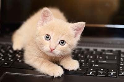 Chaton beige joue sur un clavier d'ordinateur