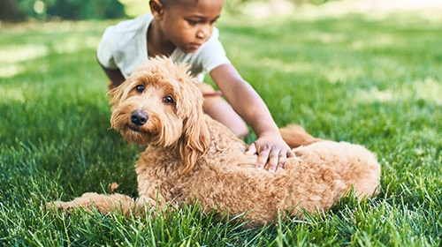 image of boy petting dog in the grass