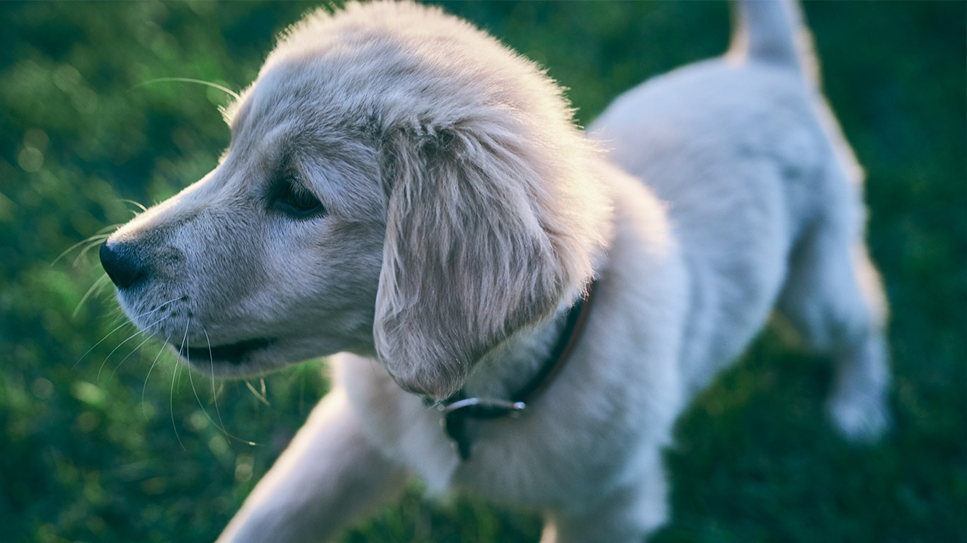 Hill\'s Pet Nutrition - Alimento para perros, alimento para gatos que ...